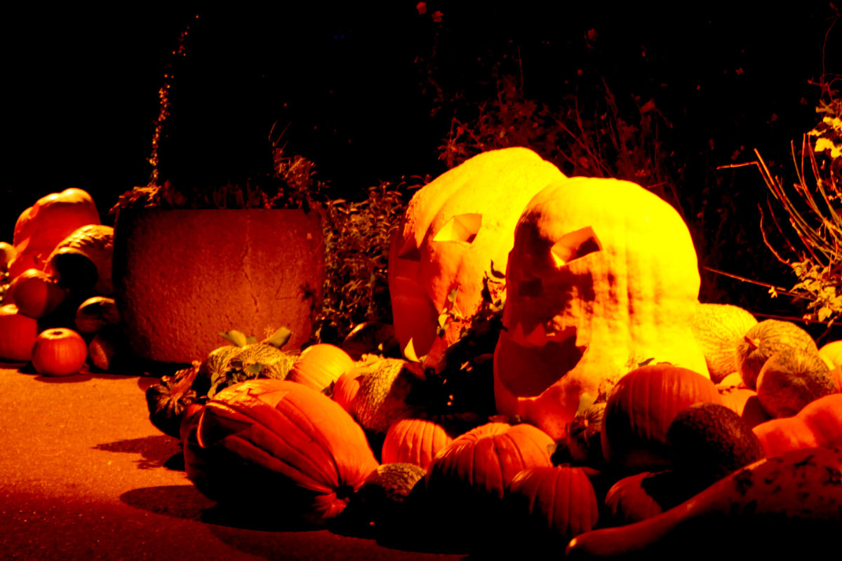 beleuchtungskonzept_halloween-im-zoo-koeln_dreimeister_06
